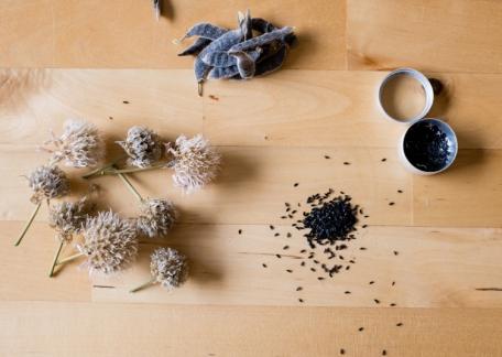【作家读书笔记】番红花:日常里的种子学 《种子的胜利》filezilla教學