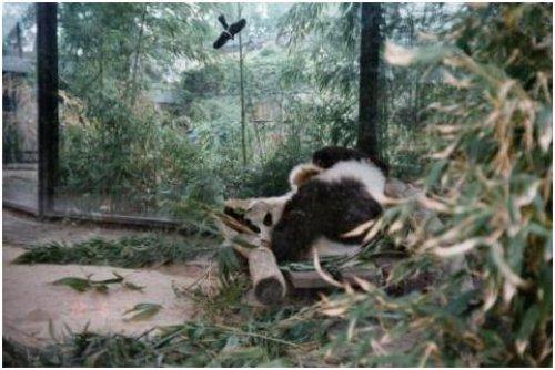 柏林動物園05
