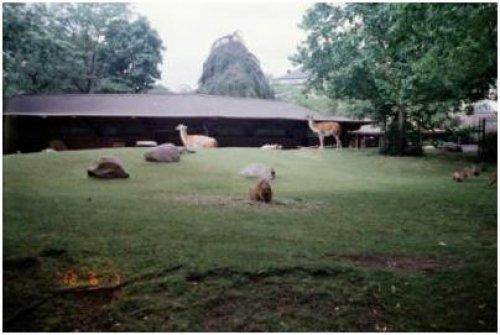 柏林動物園07