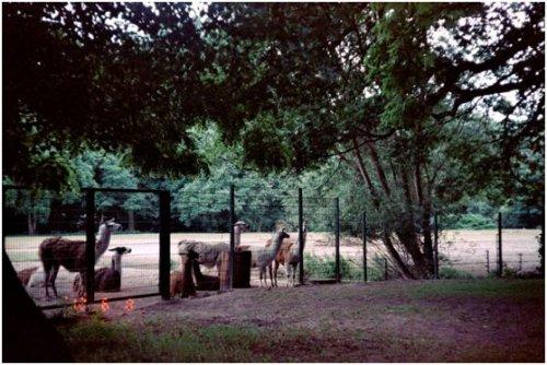 東柏林動物園02