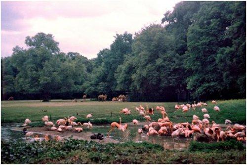 東柏林動物園03