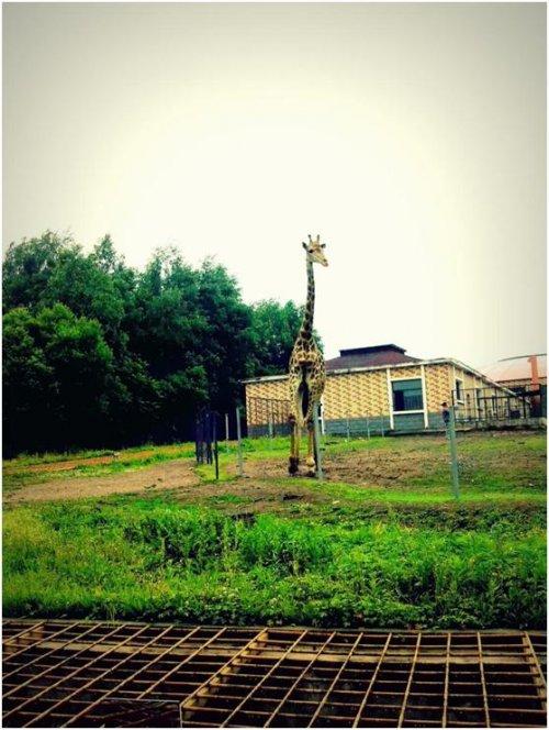 何曼莊_哈爾濱動物園03