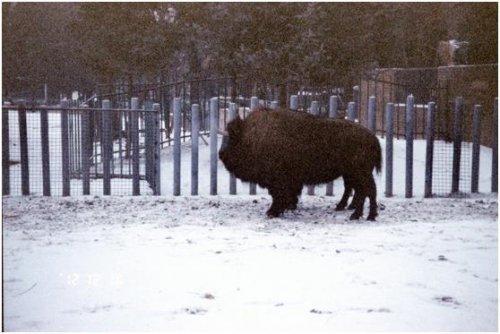 北京動物園02