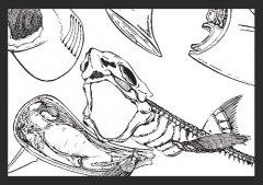 故事的解剖-8
