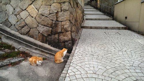 到尾道看貓-1