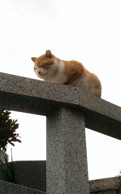 到尾道看貓-2