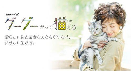 咕咕貓-1
