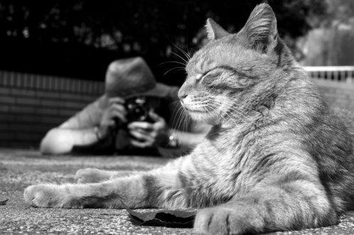 貓體詩-1