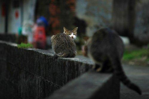 貓體詩-3