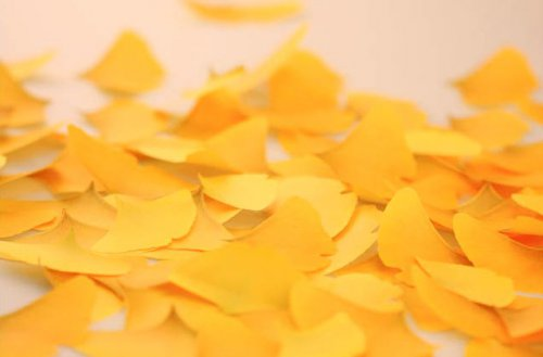 銀杏葉子便利貼-3