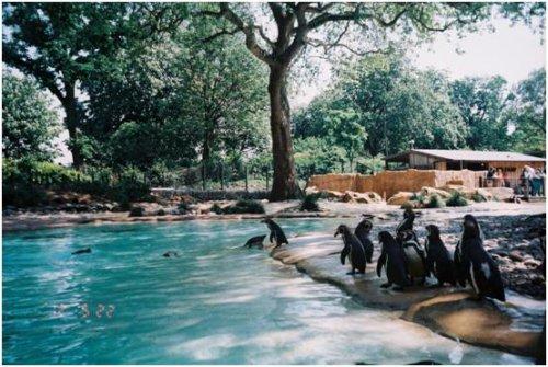 倫敦動物園02