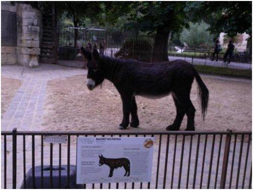 巴黎動物園101