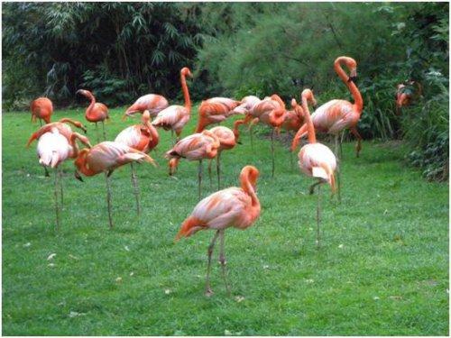 巴黎動物園103