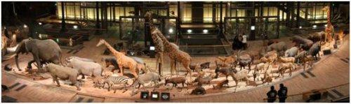巴黎動物園105
